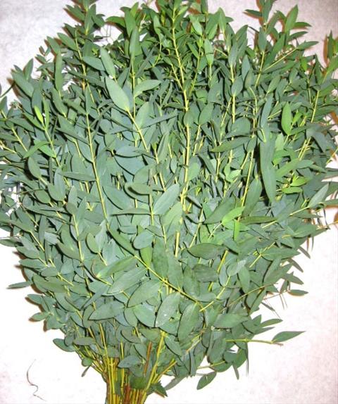 parvifoliate