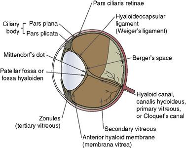 patellar fossa of vitreous