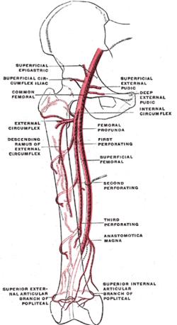 perforating artery