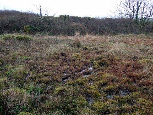 quaking bog