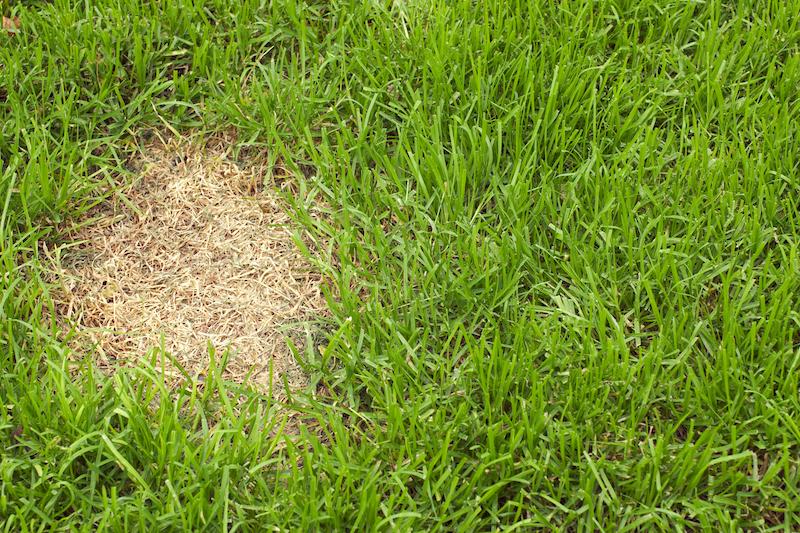 quick grass