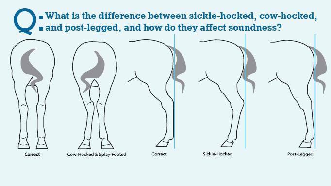 sickle-hocked