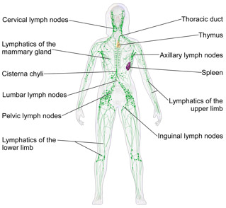 signal node