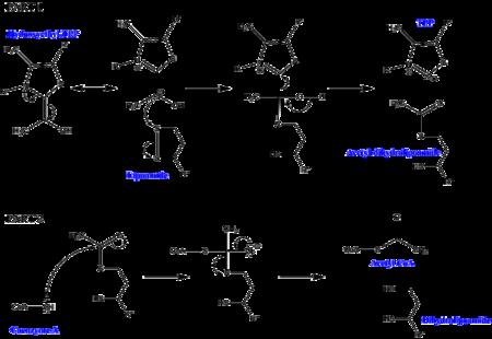 transacetylase