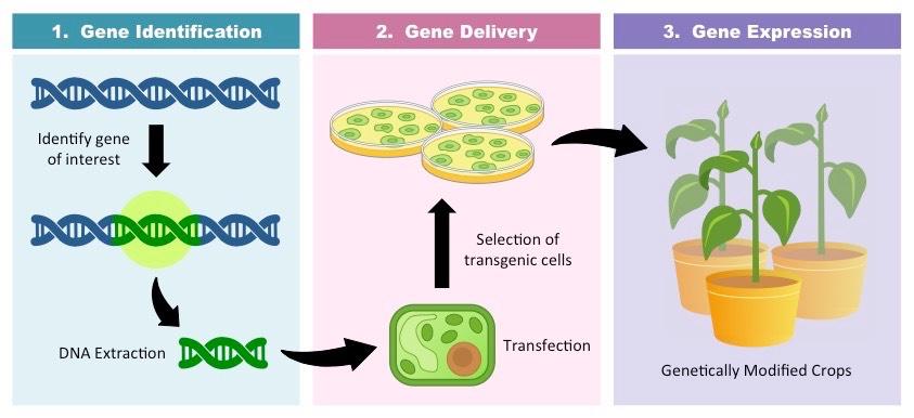 transgenics