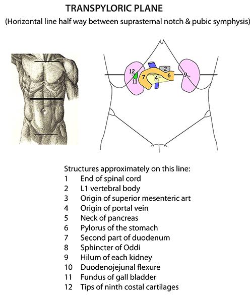 transpyloric plane