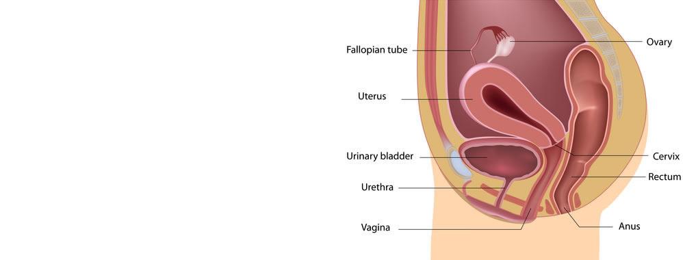 urethrobalanoplasty