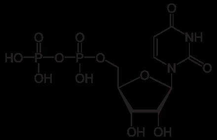 uridine diphosphate