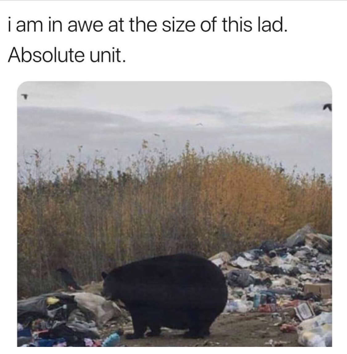 absolute unit - Liberal Dictionary