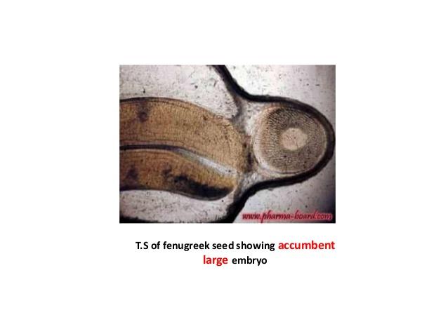 accumbent