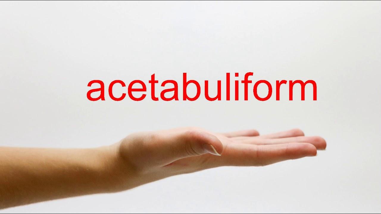 acetabuliform