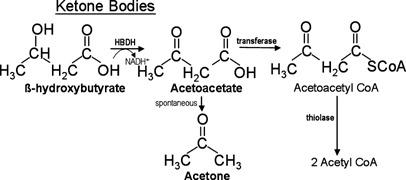 acetone body