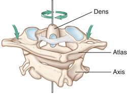 acrometagenesis
