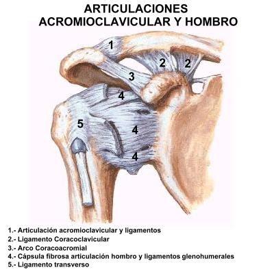 acromiocoracoid