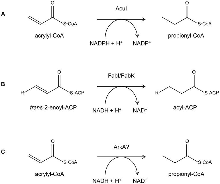 acrylyl