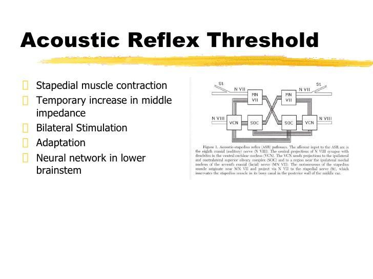 auditory reflex
