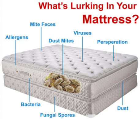 bacteria bed
