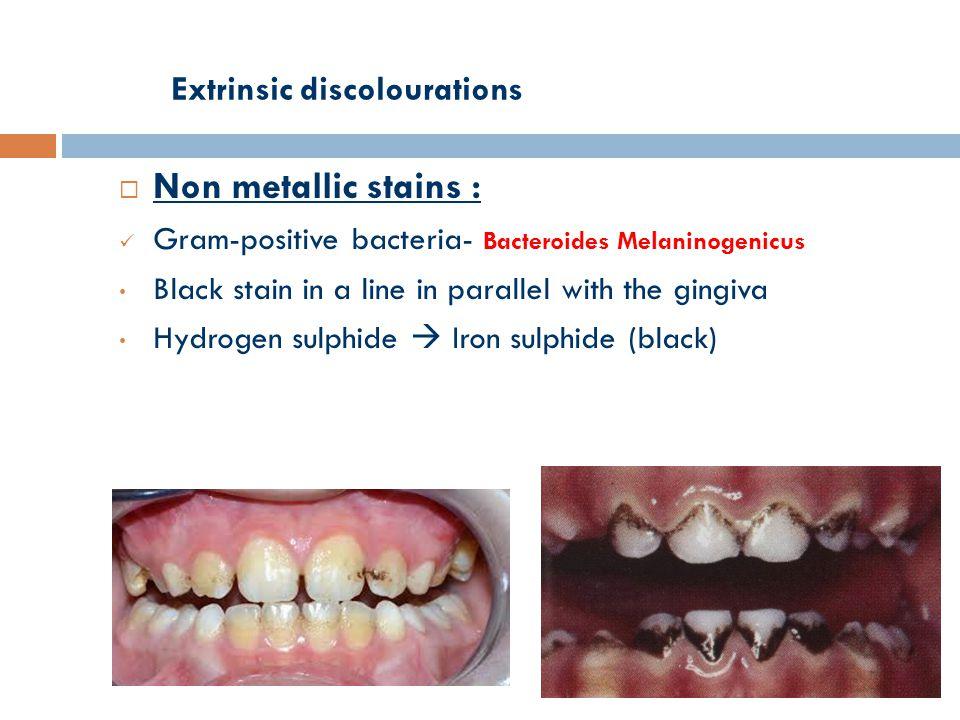 bacteroides melaninogenicus