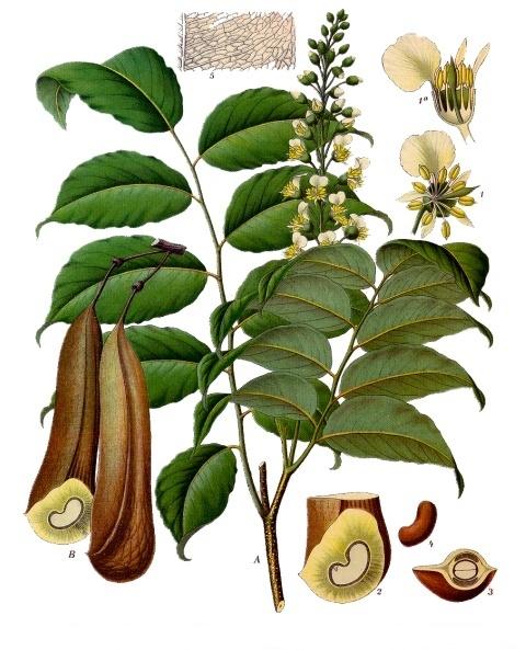 balsam of peru