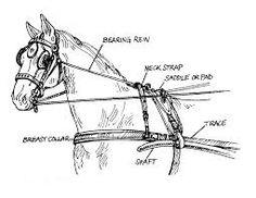bearing rein