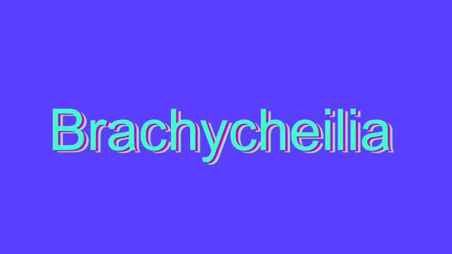 brachycheilia