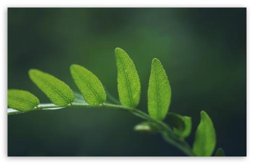 branch plant