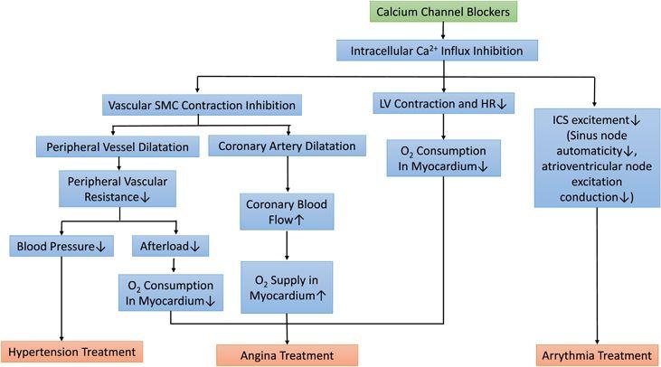 calcium blocker