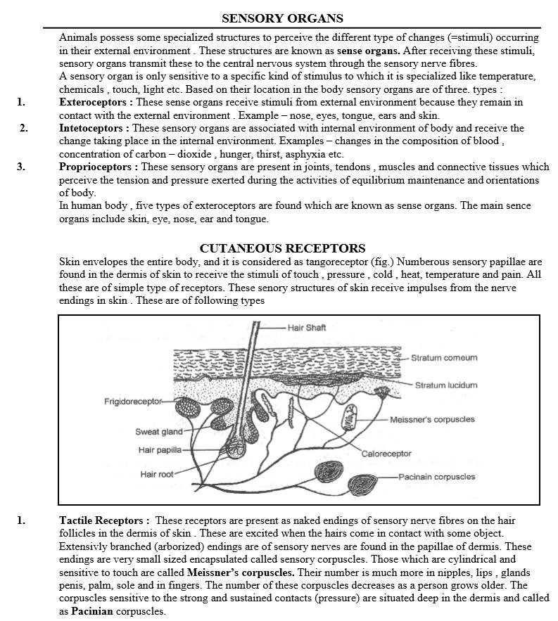 nerve pdf free download