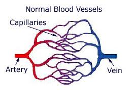 capillary vein