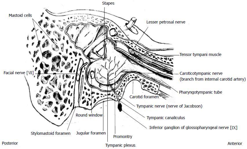 caroticotympanic