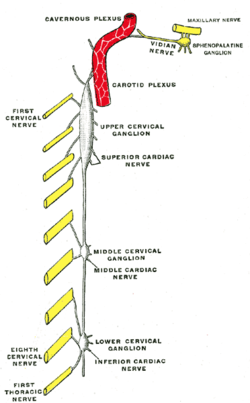 Superior cervical ganglion