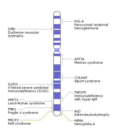 chromosomal map