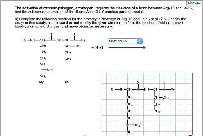 chymotrypsinogen