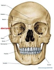 dacryon