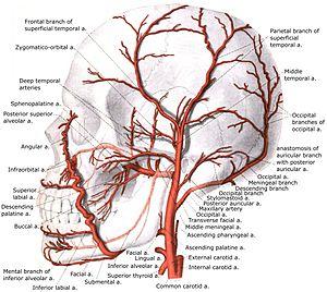 deep temporal vein