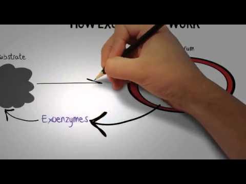 exoenzyme