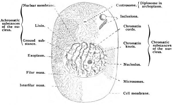 exoplasm
