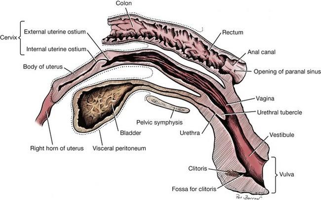 fossa of vestibule of vagina