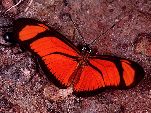 four-footed butterfly