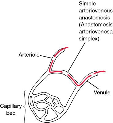 homocladic anastomosis