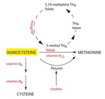 homocystine