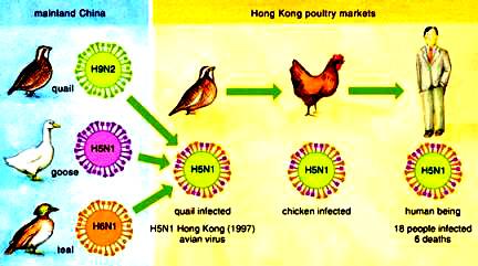 Hong Kong influenza