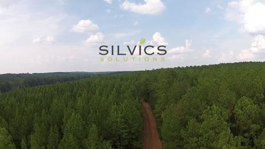 silvics