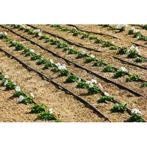 trickle irrigation