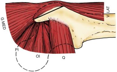trigastric