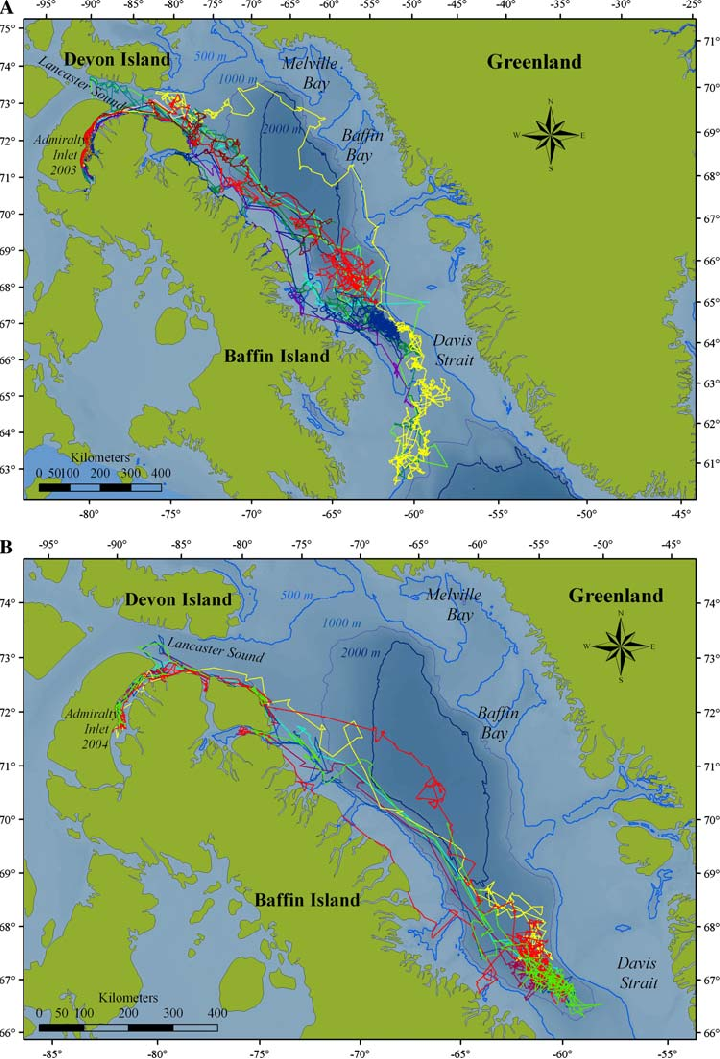 a Tracklines from 13 narwhals tagged in August 2003 in Admiralty Inlet,  | Download Scientific Diagram