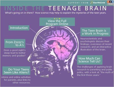 Inside The Teenage Brain | FRONTLINE | PBS | Adultescent brain, cognitive  neuroscience, emotion