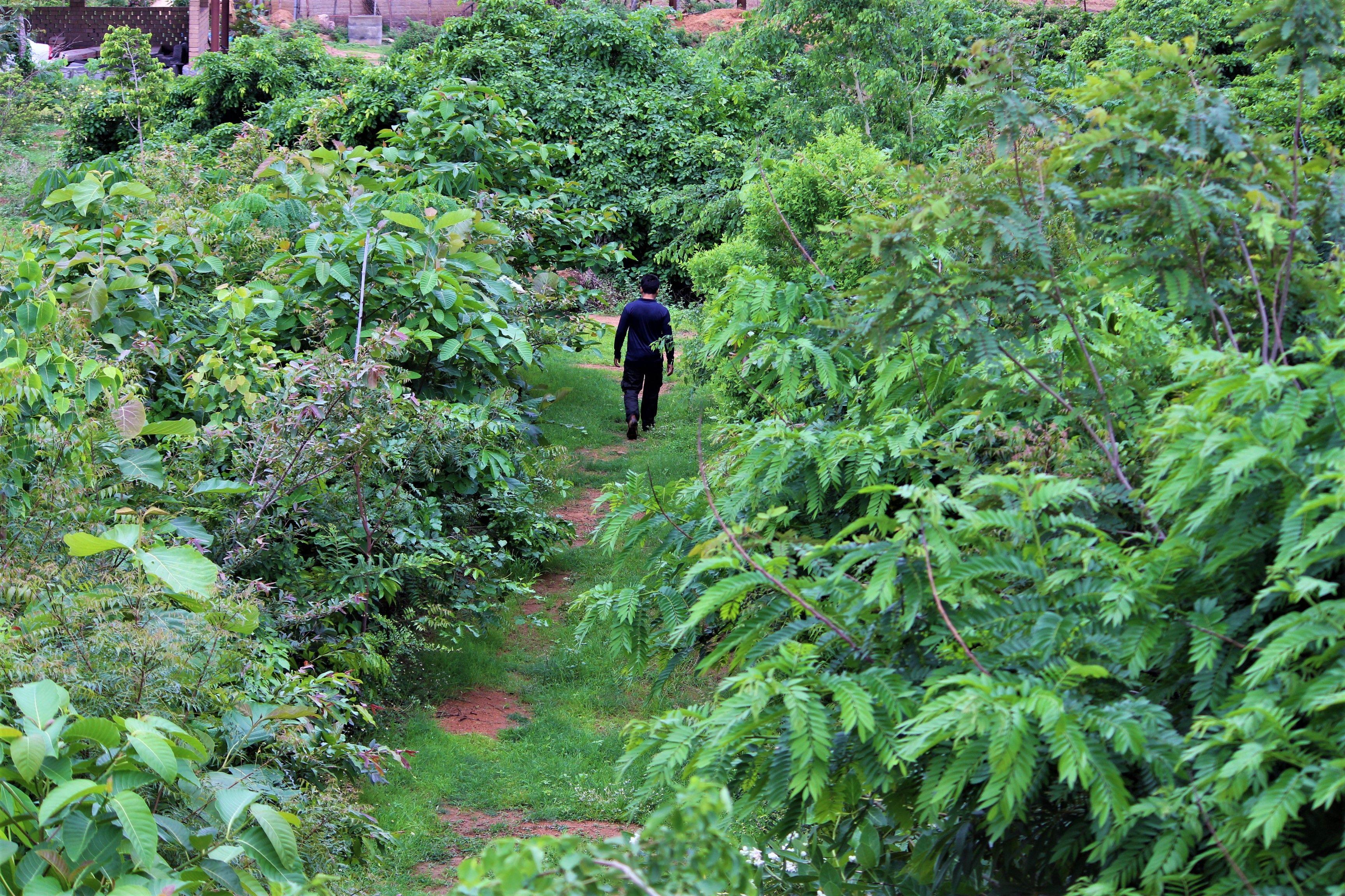 Arbor Rd Estate, Telangana
