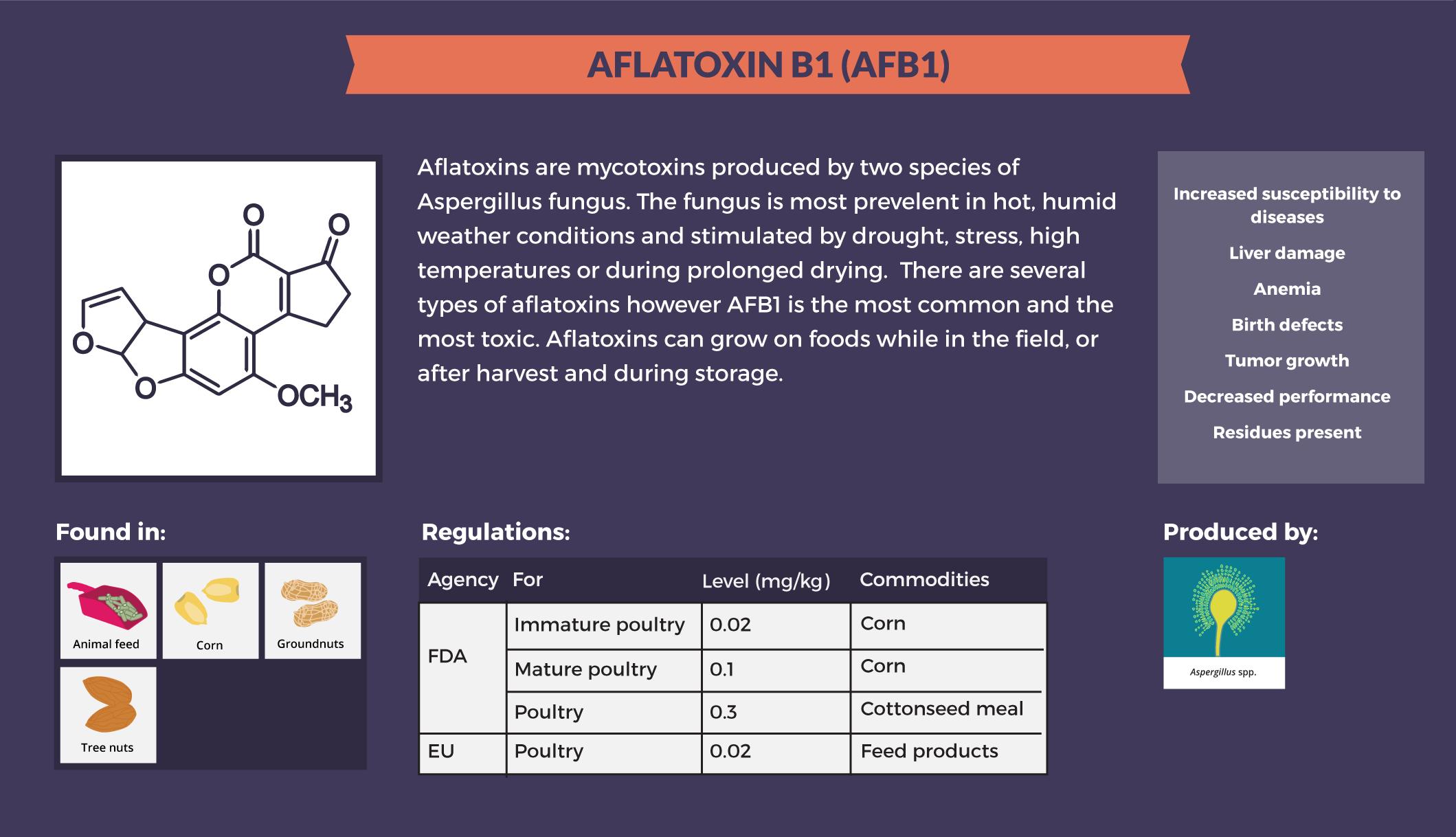aflatoxicosis