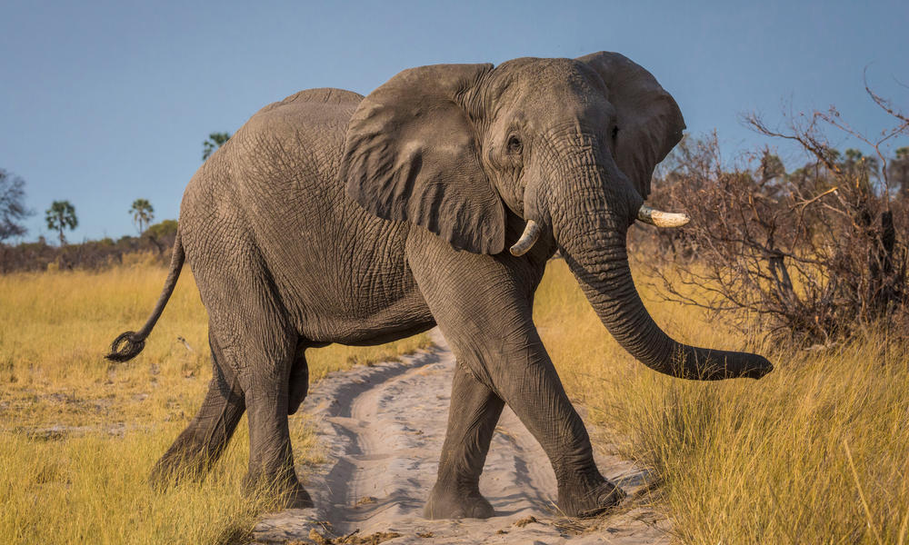 African Elephant Stories